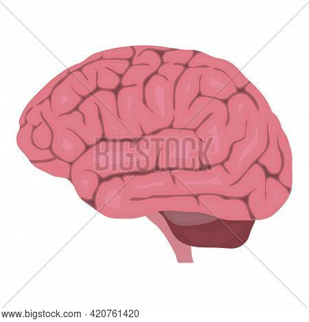 Brain. Realistic Brain Isolated On White Background. Vector, Cartoon Illustration. Vector.
