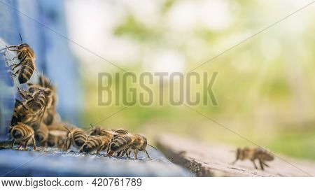 Bees Flying Back In Hive After An Intense Harvest Period