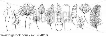 Tropical Leaves And Flowers. Hand Drawn Linear Vector Illustrations. Protea Exotic Flower, Palm Leav