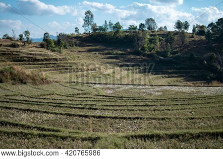 Green Terraced Rice Fields  On A Hillside Farm Between Kalaw And Inle Lake, Shan State In Rural Myan