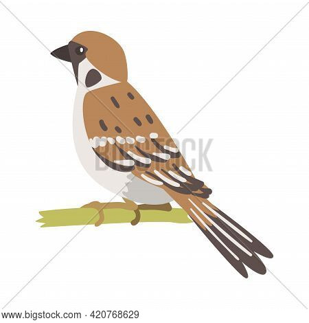 Sparrow As Brown And Grey Small Passerine Bird With Short Tail Sitting On Branch Vector Illustration
