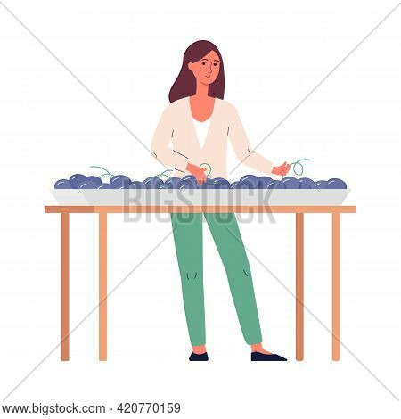 Woman Sorting Grape For Wine Making, Flat Vector Illustration Isolated On White.