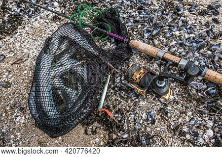 Catch Of Garfish In A Net With Lure And A Casting Wheel, Frederikssund, Denmark, April 28, 2021