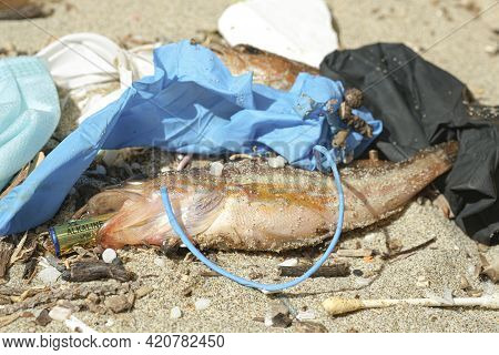 Marine Fish Dead Eating Alkaline Discarded Battery On A Debris Polluted Sea Habitat, Nature Contamin
