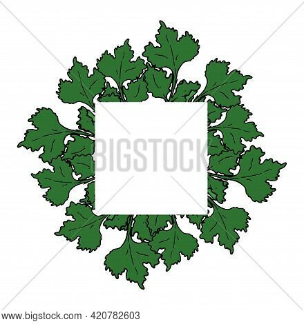 Vector Square Frame Made Of Green Coriander Leaves With An Empty Space Inside For Text On A White Ba