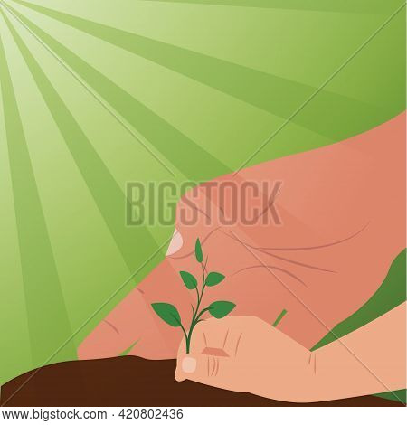 Hand Holding A Sprout With A Handful Of Ground