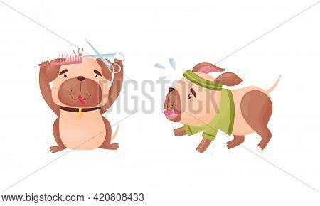 Cartoon Pug Dog Character Grooming And Jogging Vector Set