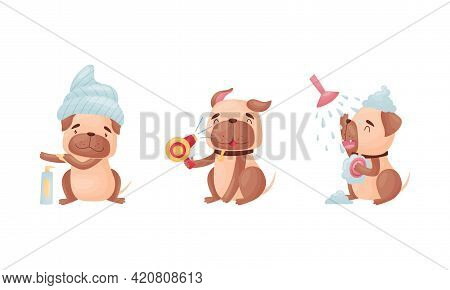 Cartoon Pug Dog Character Grooming Drying Fur And Taking Shower Vector Set