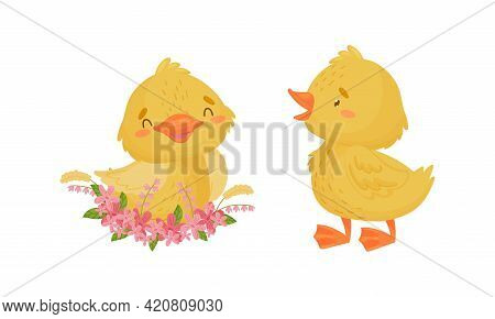 Cute Yellow Duckling Sitting In Floral Nest And Walking Vector Set