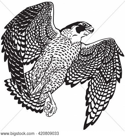 Falcon A Hunter In Flight. Flying Bird Of Prey. Falconry. Black And White Isolated Vector Illustrati