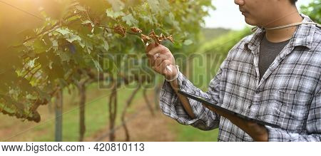 A Young Farmer Is Using A Computer Tablet While Standing Among The Orchard.