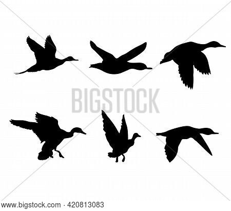 Ducks Are Flying. A Set Of Black Silhouettes Of Ducks. Vector Illustration.