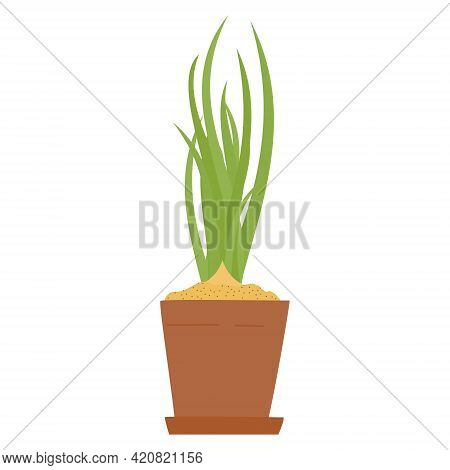 Drawing Of Spring Onion Or Chives In Clay Pot