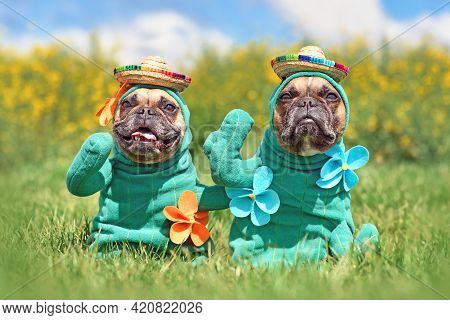 Funny Dog Costumes. French Bulldogs Dressed Up With Cactus Plant Halloween Dog Costumes With Fake Ar