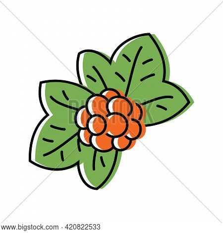 Cloudberry. Natural Berries. Vector Illustration In Flat Style