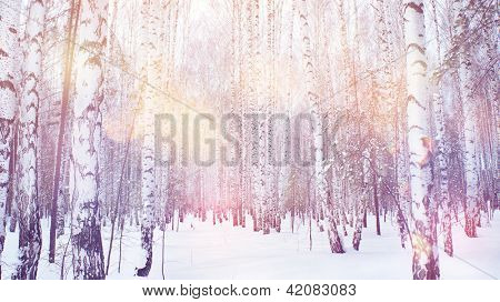 winter magic birch grove
