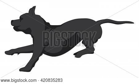 Silhouette Running Brindle Staffordshire Terrier Or Pitbull Isolated On White. Vector Illustration.