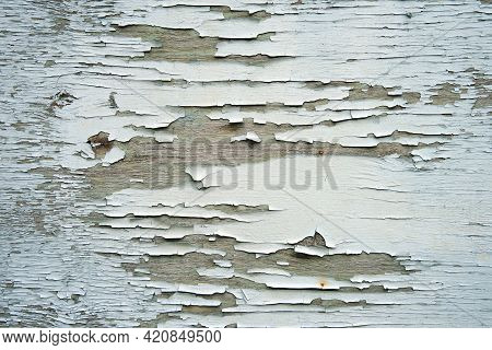 Blue Peeling Paint On The Wooden Wall. Weathered Rough Painted Surface With Patterns Of Cracks And F