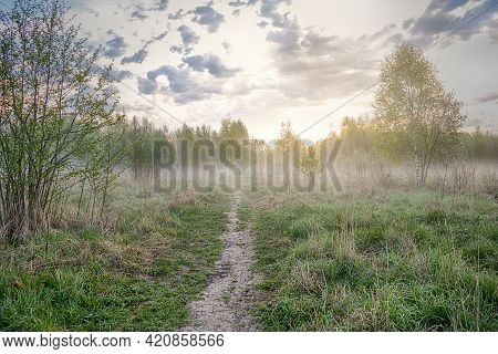 Morning In The Forest. The First Rays Of The Sun Appear On The Horizon Behind The Trees. Fog Is Spre
