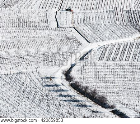 Panoramic Drone View Of Snow-covered Vineyards In The Rhine Valley