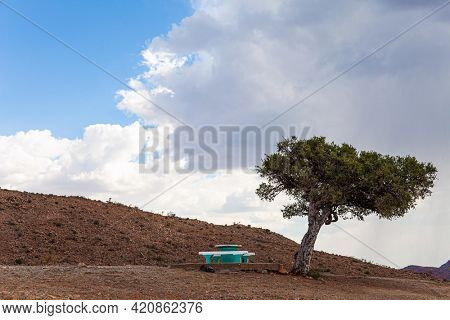 Picturesque acacia tree and bench for the weary traveler. Travel to Africa. Savanna covered with dry yellow grass. The magical desert in Namibia. Hot day, lush clouds float in the blue sky.