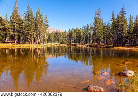 Picturesque quiet lake in a coniferous forest. Sunrise. The forests and mountains reflected in the smooth water of the lake. The Tioga Road and Pass in Yosemite Park. USA