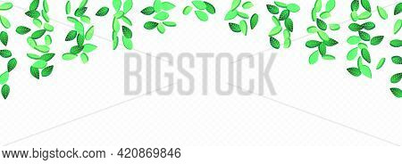 Grassy Leaves Ecology Vector Panoramic Transparent Background Concept. Wind Foliage Branch. Forest G