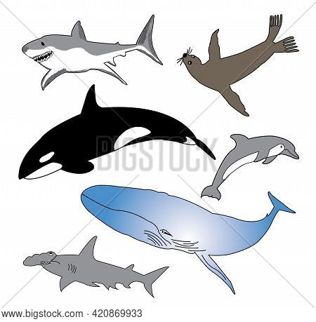 Vector Collection Of Marine Life. Sea Life Illustration Featuring The Great White Shark, Sea Lion, K