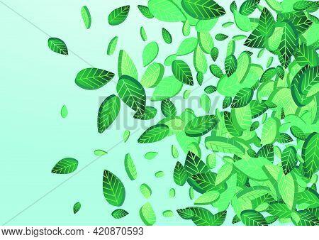 Mint Foliage Transparent Vector Blue Background Plant. Nature Leaf Border. Grassy Greens Fresh Conce