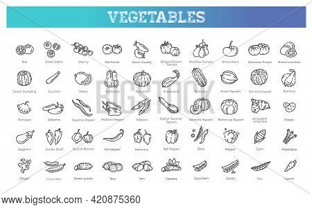 Vector Collection With Various Kind Of Tomatoes, Peppers, Squashes And Other Vegetables