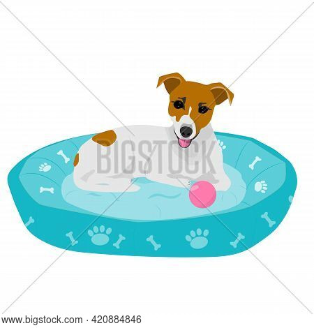 Smiling Jack Russell Terrier Lying On A Turquoise Bed. Vector Illustration