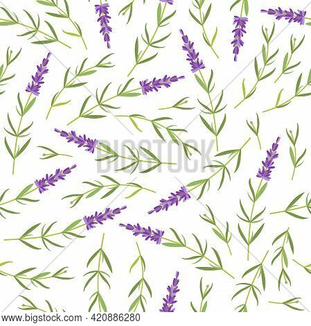 Seamless Pattern With Wild Lilac Flowers. Lavender. Vector Flat Grass Lavender Illustration. For Wal