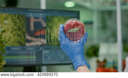 Closeup Of Chemist Holding In Hands Vegan Beef Meat Sample Researching Genetically Modified Vegetari