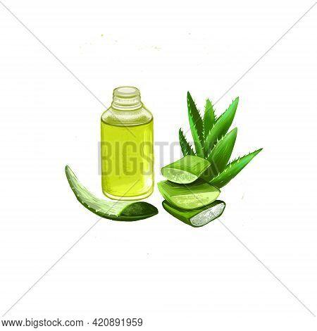 Aloe Vera Ayurvedic Herb Digital Art Illustration With Text Isolated On White. Healthy Organic Plant
