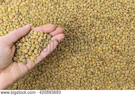 Womans Hand With Uncooked Lentil Grains. Groats Dry Brown Lentils. Organic Food Background. Healthy