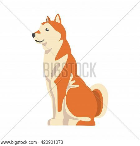 Shiba Inu As Japanese Breed Of Hunting Dog With Prick Ears And Curled Tail In Sitting Pose Vector Il