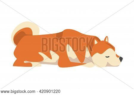 Shiba Inu As Japanese Breed Of Hunting Dog With Prick Ears And Curled Tail In Lying Pose Vector Illu