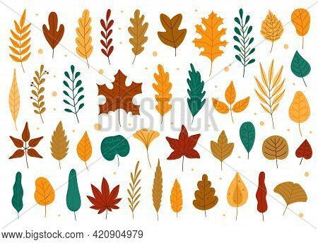 Autumn Leaves. Oak, Maple, Elm Dry Fallen Leaf. Hand Drawn Fall Forest Yellow Or Red Foliage. Dried