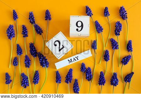 Calendar For May 29: Cubes With The Number 29, The Name Of The Month Of May In English, Scattered Fl