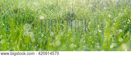 Morning meadow with dew Morning meadow with dew