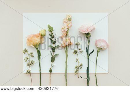 Fresh flowers on white paper