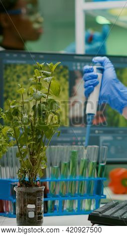 Biologist Researcher Using Micropipette Putting Genetic Solution In Test Tube Developing Gmo Medical