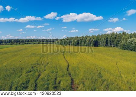 Trail In The Field Grass. Meadow Picturesque Summer Landscape With Clouds On Blue Marvelous Sky View