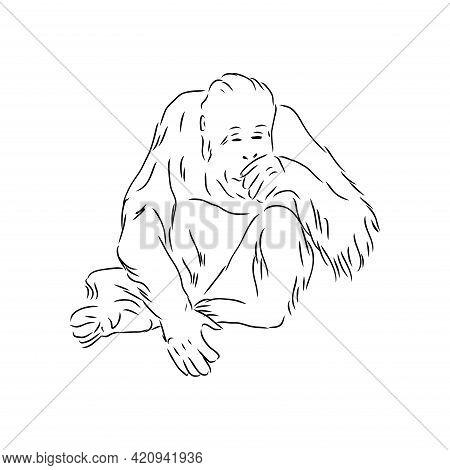 Vector Illustration. Hand Drawn Realistic Sketch Of An Ape, Orangutan