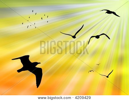 Birds flying in the sky against a colorful sun poster