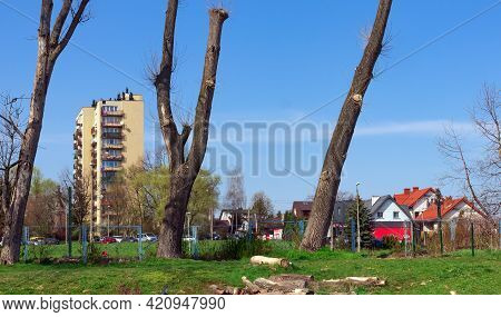 Crippled Trees, Trunks Without Branches, Clipped Tops, Sawn Branches, Cityscape