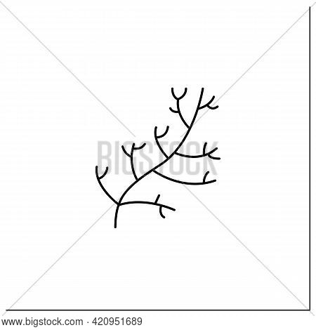 Dill Glyph Icon. Special Species For Dishes. Improve Food Taste. Dietary Food. Vegetarian, Healthy N