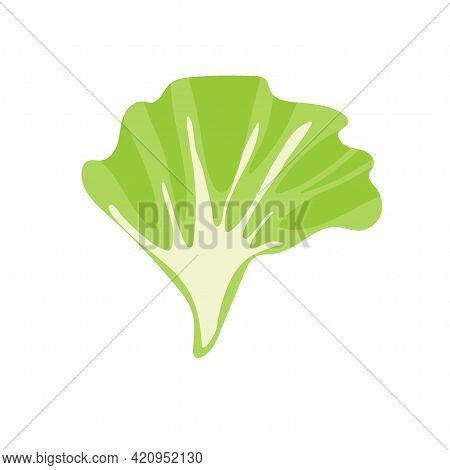 Green Lettuce Leaf. Fresh Cartoon Organic Vegetable Isolated On White Background. Overhead View. Fla