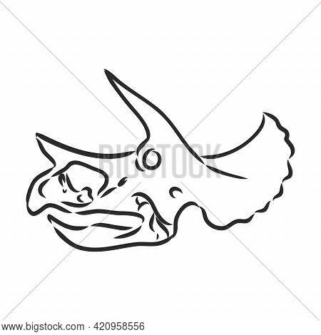 Dinosaur Skull. Drawing Of T-rex Skull Dinosaur Skeleton Vector