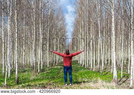 Men Tourist With Her Arms Outstretched In Birch Forest.rear View.spring Time.